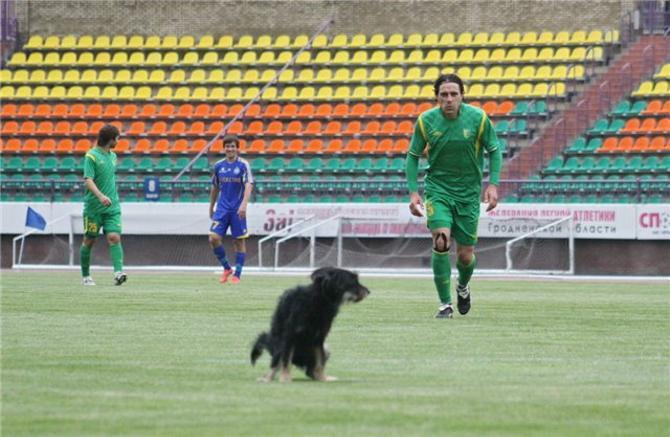 Гродненская собачка «дала джазу» прямо на стадионе.