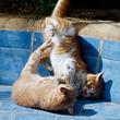 Киса, полегче! Почему кошки созданы для смешанных единоборств