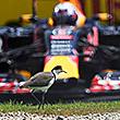 Почему «Ред Булл» не покинет «Формулу-1»