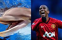 7 дельфинов, которые подозрительно похожи на Эшли Янга