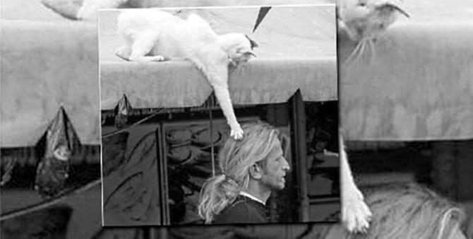 Дерзкий белый котик атакует шевелюру легендарного Робби Сэвиджа