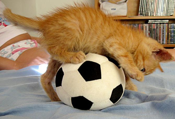 Юрий Вергейчик считает, что коты могут помочь белорусскому футболу